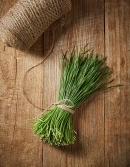 친환경 영양부추